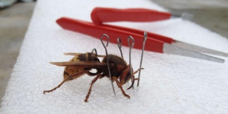 Подготовка осы