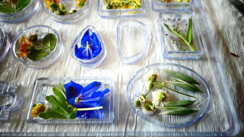 Еще свежие растения